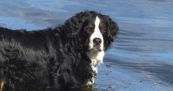 Consommation, Chien,Doggyguard,Faire garder son chien pendant les vacances