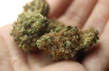 Consommation, cannabis, légalisation