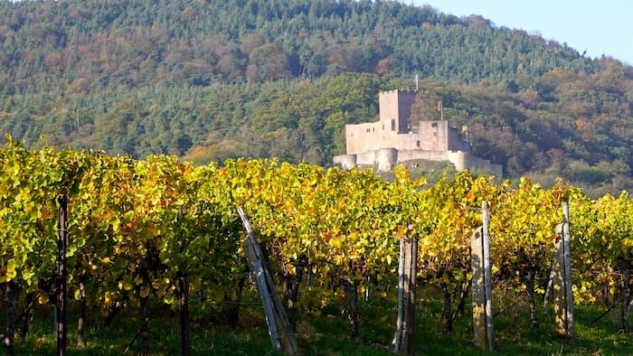 domaine viticole bordeaux